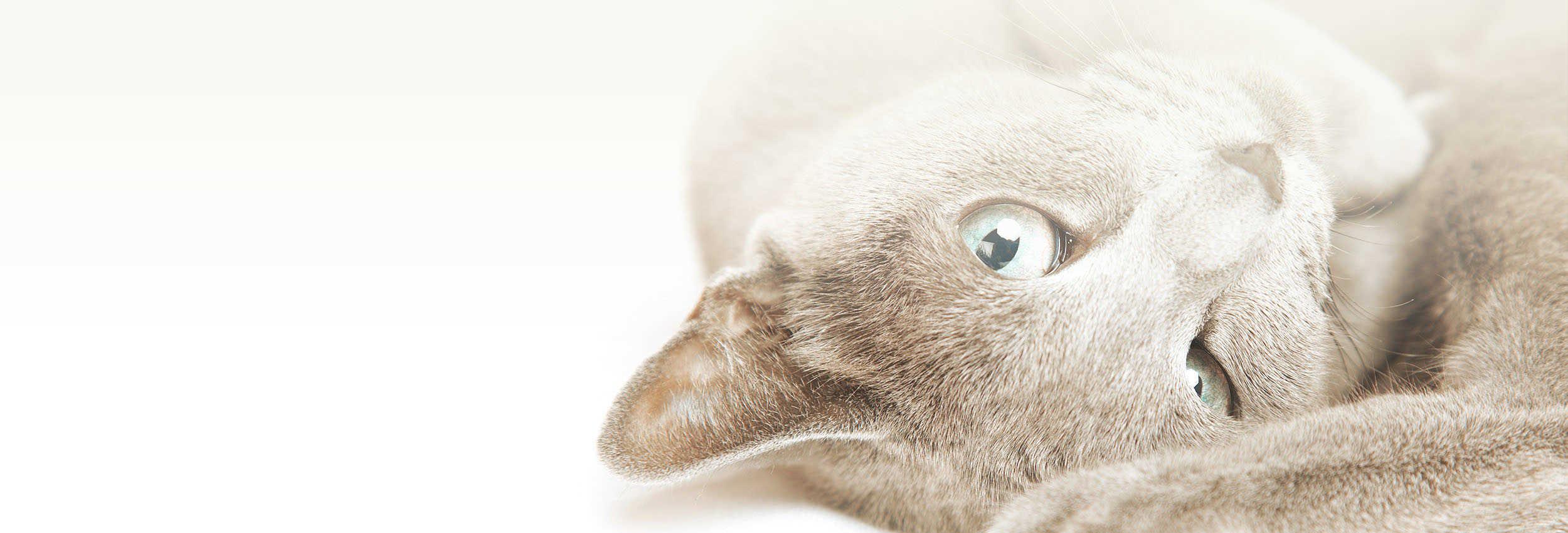 slide cat