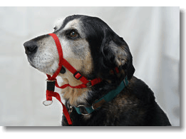 Adjustable Obedience Head Collar