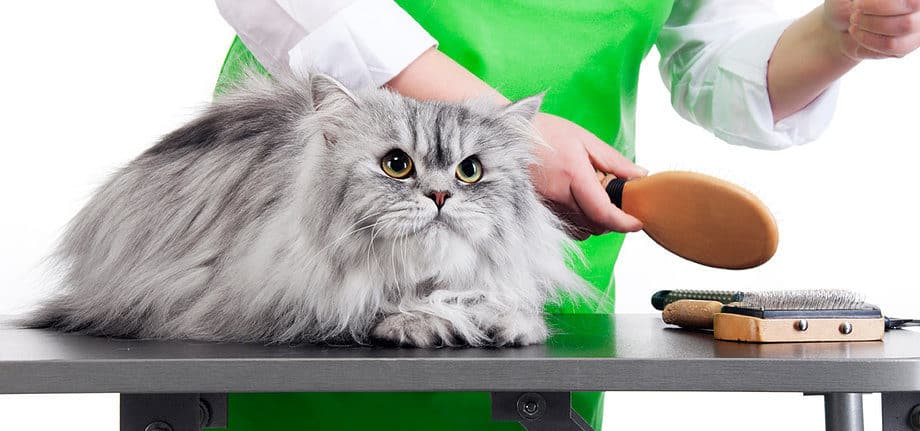 Why Would a Cat Require a Professional Groomer?