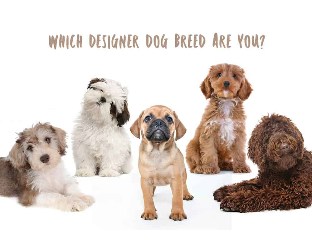 Dog Breeds For Thera Pets