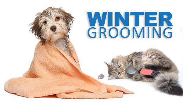 Five Winter Dog Grooming Myths