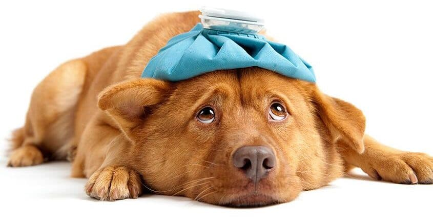 A checklist for your dog's first aid kit