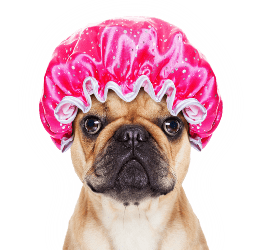 Dog Grooming in Saskatoon