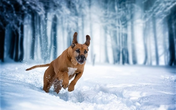 Preventing Dry Skin for Your Dog in Winter